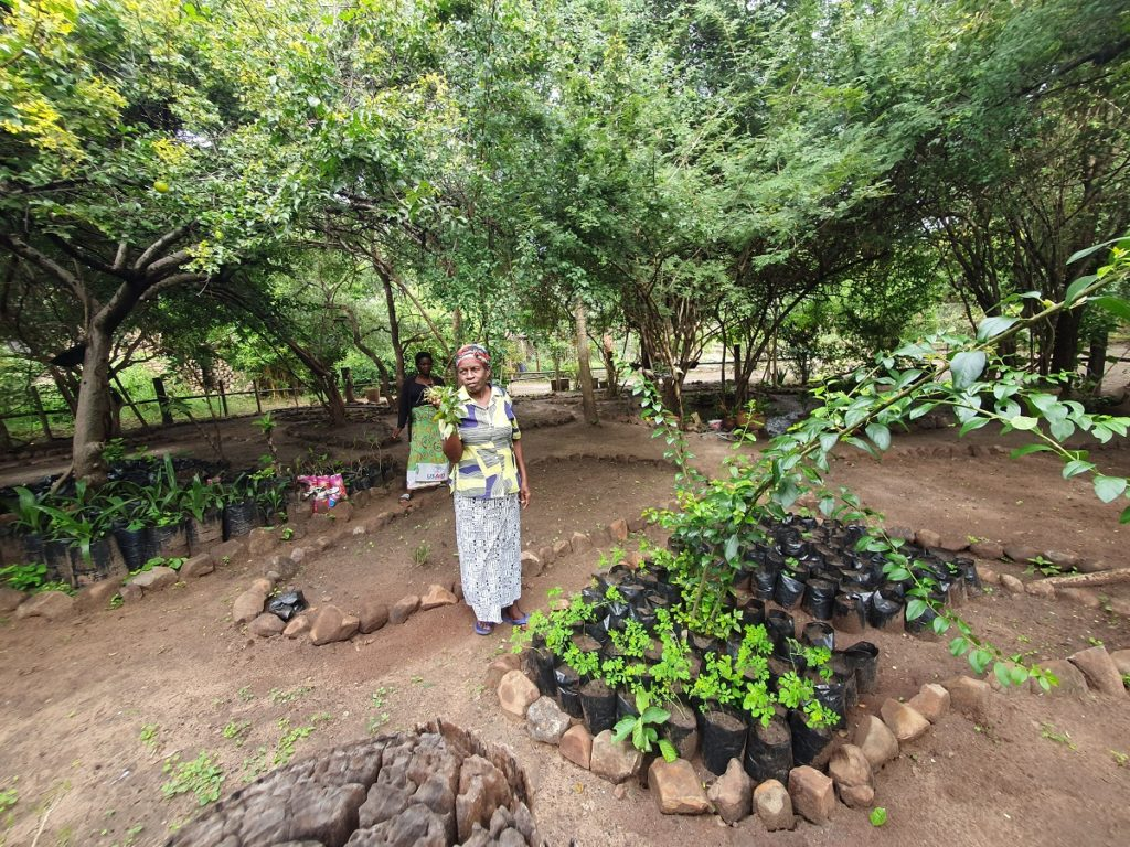 Woman Standing by Tree Saplings Holding Plant
